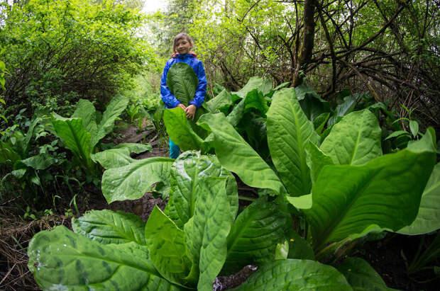 Что делает растения такими огромными? Фото: из открытых Интернет-источников