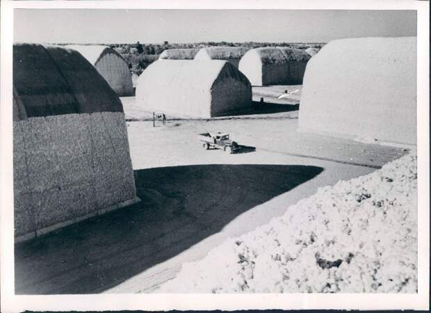 1953. Узбекистан. Огромные груды собранного хлопка в ожидании транспорта