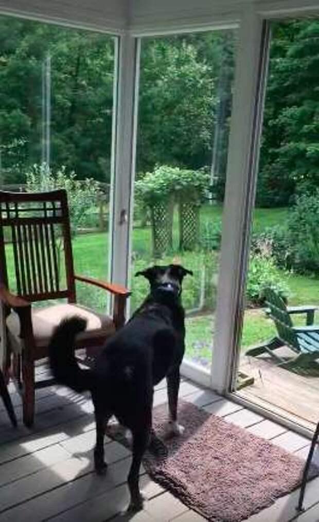 Пёс поймал птицу, залетевшую в дом, а потом выбежал на улицу, чтобы отпустить её