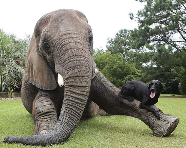 7 историй животных, чью дружбу сложно представить