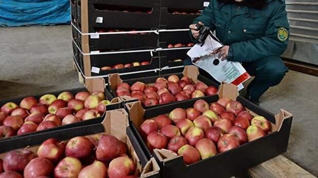 """Не шутка? Белоруссия прекратила реэкспорт """"санкционных"""" плодов и овощей в Россию"""