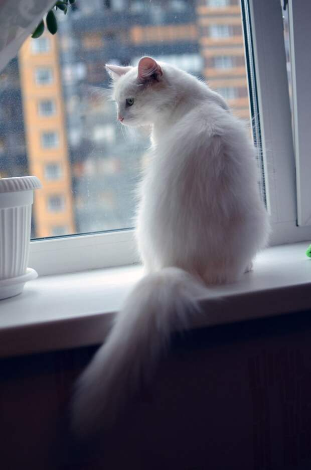 Воздушная, белоснежная, восхитительная!