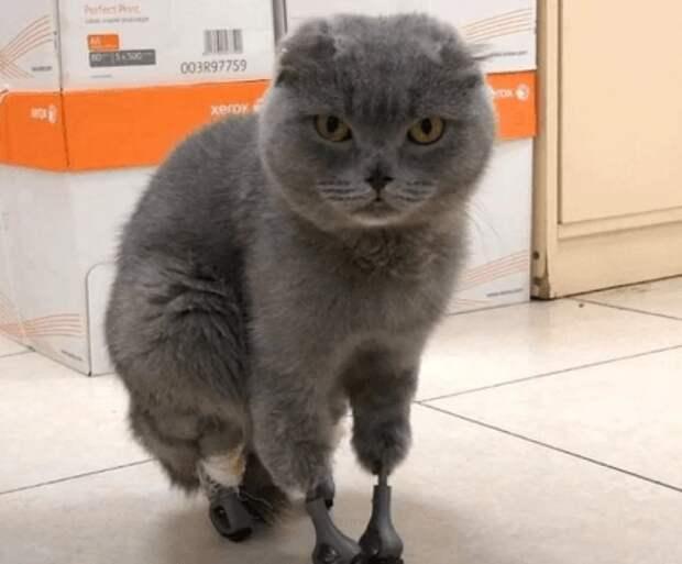 Кошка, которая отморозила лапки на морозе, получила второй шанс!