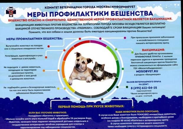 Специалисты разъяснил горожанам правила содержания домашних животных