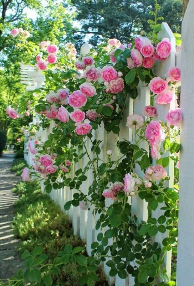 красивые клумбы для цветов