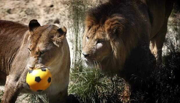 zhivotzaiyun 5 Лучшие фотографии животных со всего мира за неделю