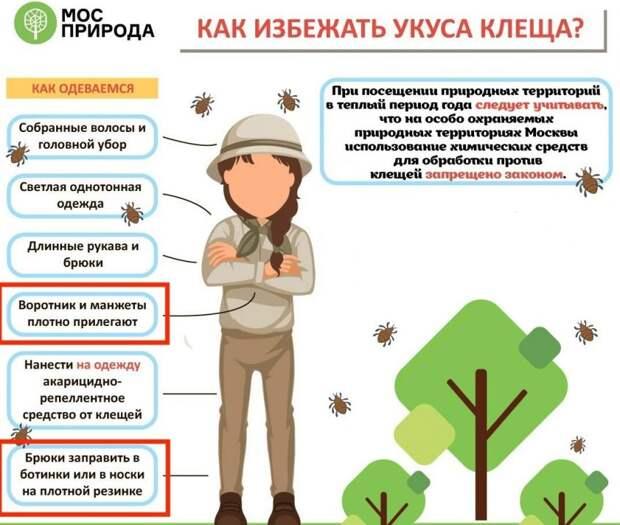 В Химкинском лесопарке активизировались клещи