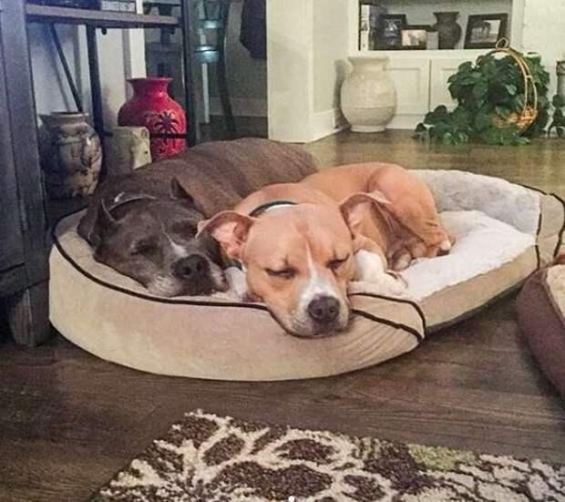 две собаки спят рядом