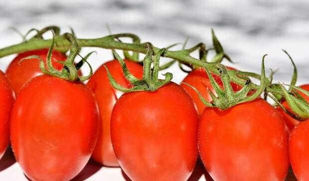 В России хотят увеличить квоту на ввоз турецких томатов