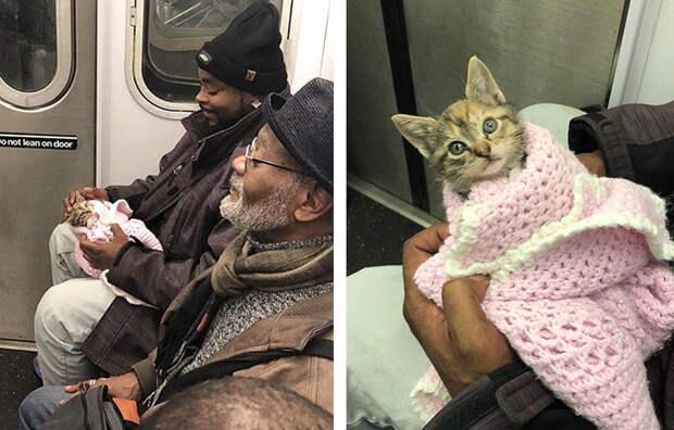 15 фото, когда животным позволили ехать вместе со всеми в салоне транспорта