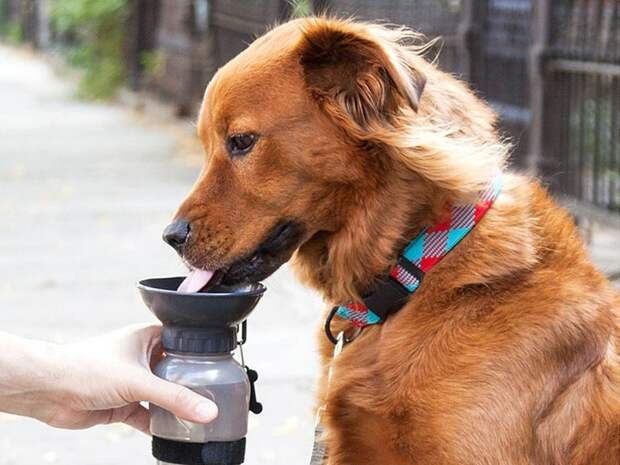переносная бутылка, чтобы поить животных водой игрушки для животных, коты, собаки