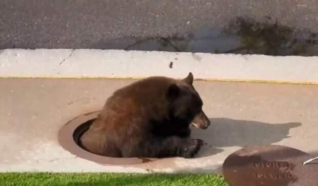 Как коммунальщики в США обнаружили «незваного гостя» в канализации