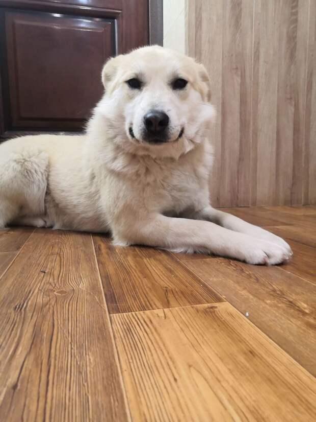 собака в доме