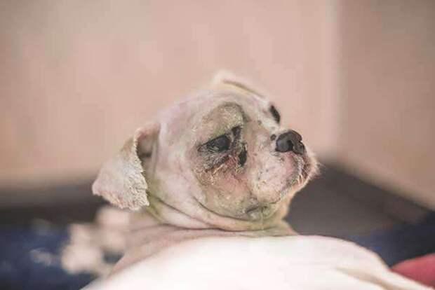 Хозяин выбросил пса на улицу… А вскоре с питомцем случилась беда!