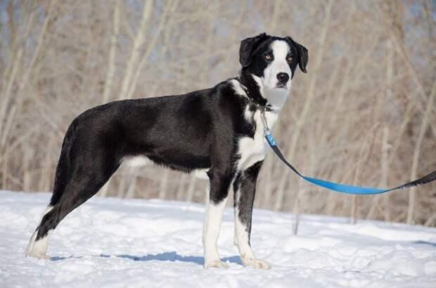 Молодой пес боялся даже выйти из вольера, но волонтеры не сдавались волонтер, истории спасения, пес, приют, собака