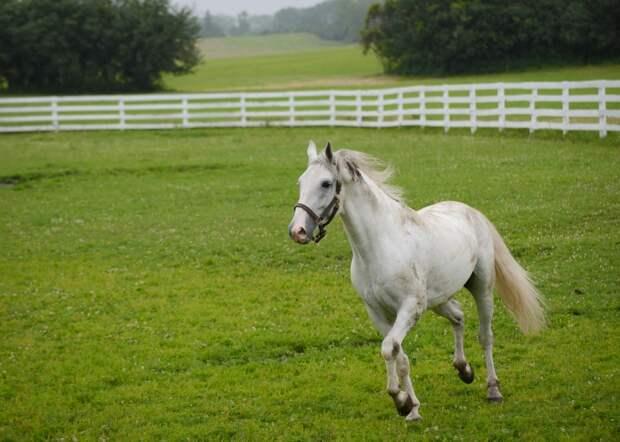 Самые музыкальные лошади (7 фото)