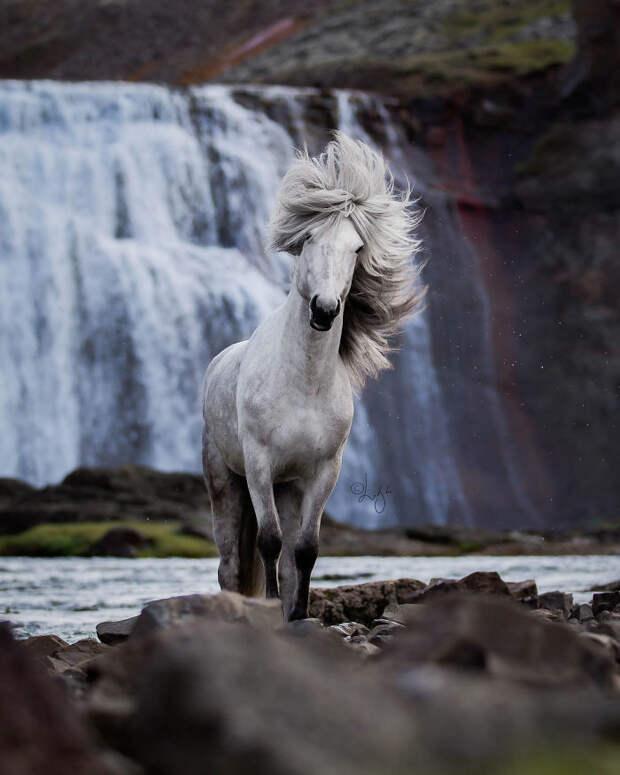 Завораживающая серия фотографий лошадей на фоне исландских пейзажей