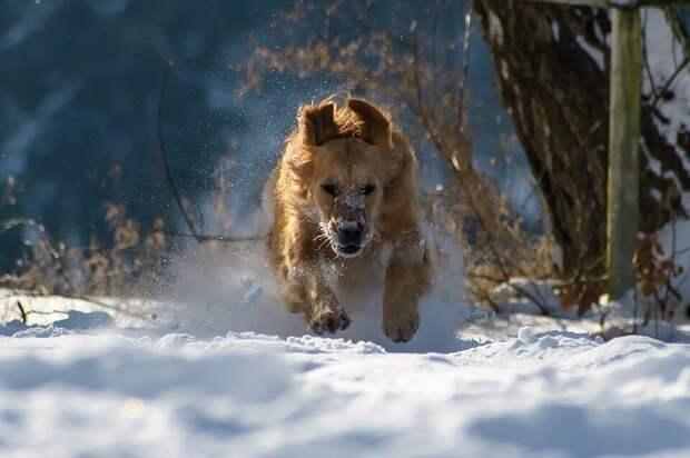 Преданнее собаки животного нет: удивительные истории из жизни, которые доказывают это