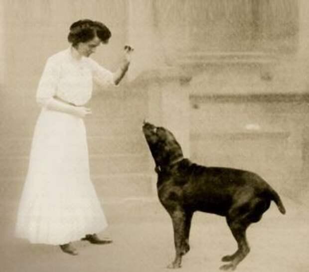 Единственная собака в истории, которая умела говорить