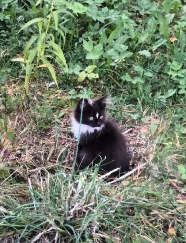 Помогите малышам! Даже взрослые коты, в большинстве своём, не доживают до весны!