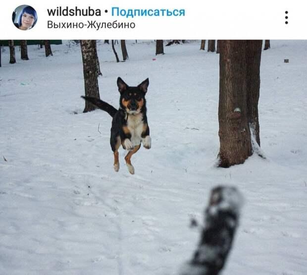 Фото дня: летающая собака в Выхине-Жулебине