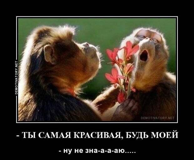 Веселые и позитивные демотиваторы про животных