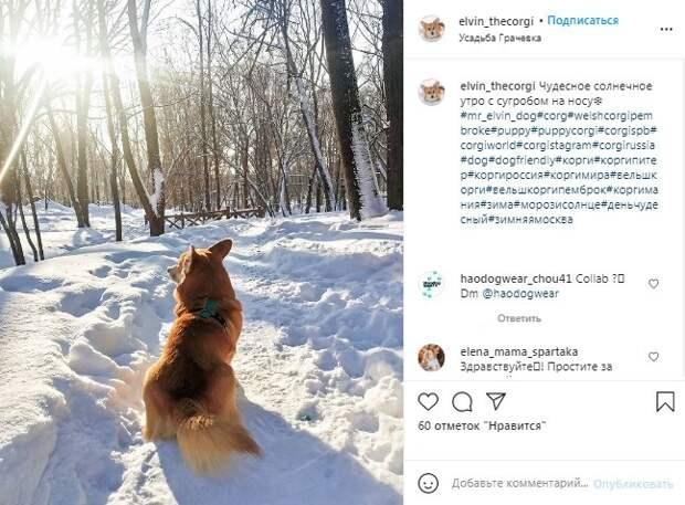 Фото дня: корги встретил солнечное утро в «Грачёвке»