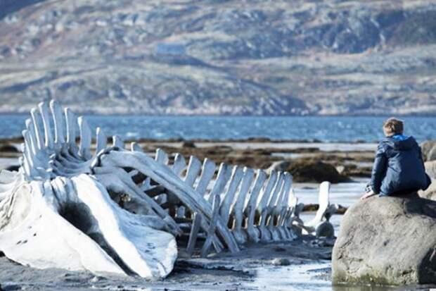 Скелет кита из фильма «Левиафан» вернули в село Териберка