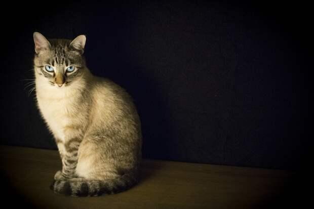 Уголовное дело завели на москвича, избившего полицейского кошкой