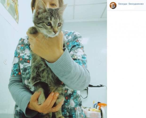 Молодая кошка из Бескудникова ищет себе дом