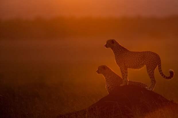 afrikanskie zakaty 4 Потрясающие африканские закаты от Пола Гольдштейна