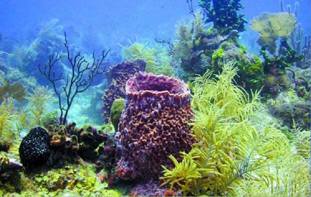 Морские губки - Морская губка и ее оптические волокна