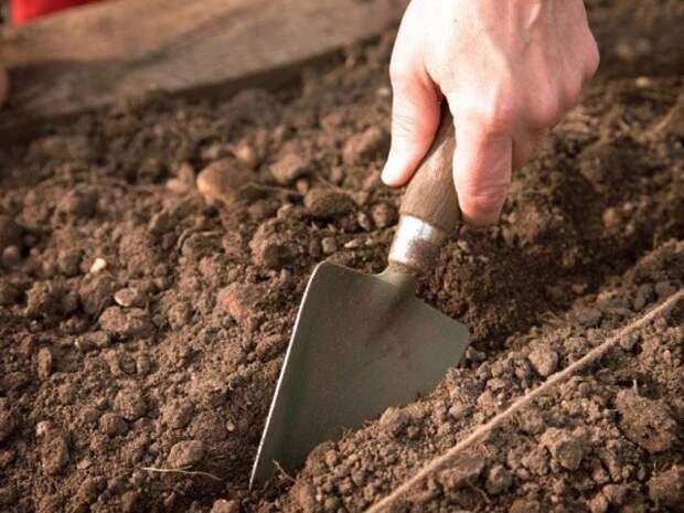 Подзимние посевы — ранний урожай