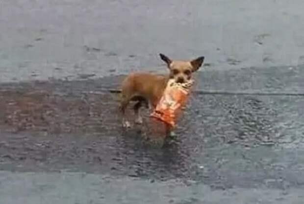 «Зачем идти в магазин?» — подумал парень, сидящий дома во время карантина, и отправил туда собаку!
