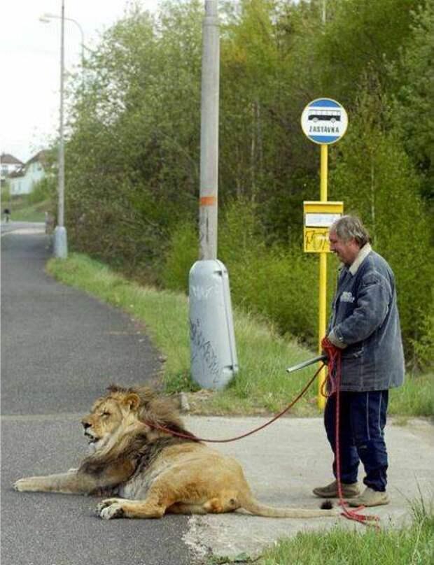 strange pet walking05