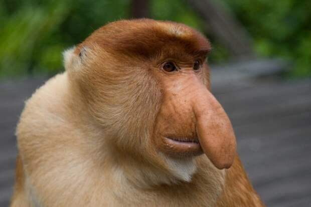 Необычные животные, о которых вы могли не знать