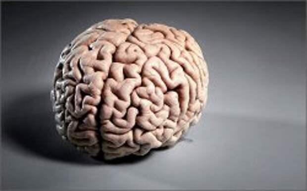 За что отвечает левое и правое полушарие головного мозга?