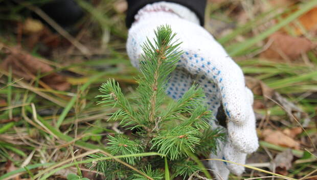 Учителей Подольска приглашают провести урок о защите леса в рамках экопроекта