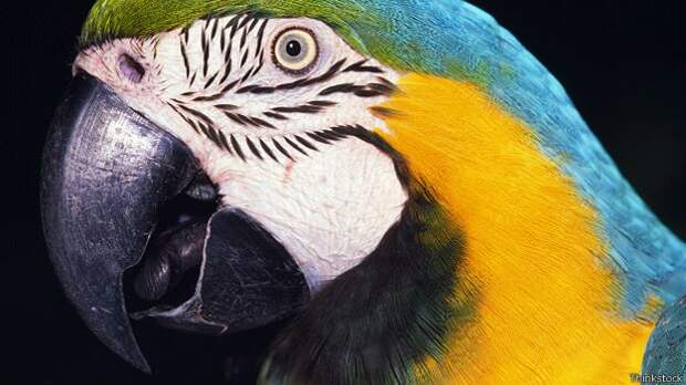 Тайна эволюции: Почему у человека глаза спереди?