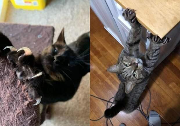 Эти милейшие котики, все таки – хищники! И вот доказательства!