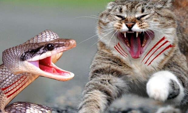 10 животных, которых боятся змеи