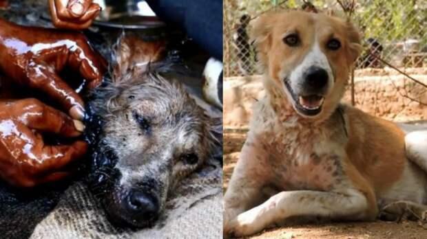 История собаки: из бочки с дёгтем — в море счастья!