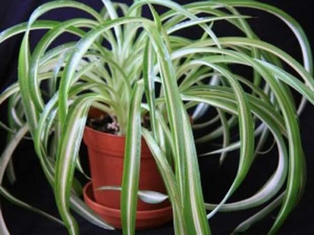 Комнатные растения в интерьере детской.