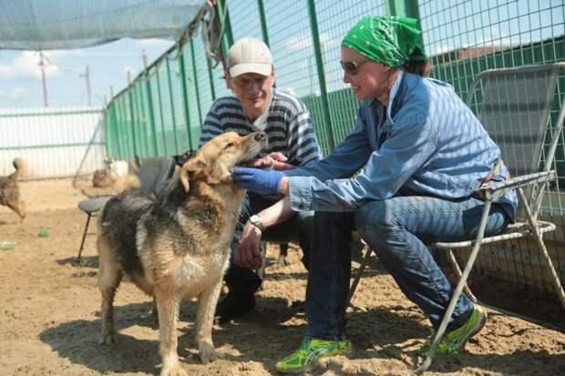 Корреспондент «ВО» поработал в приюте для животных на Пехорской
