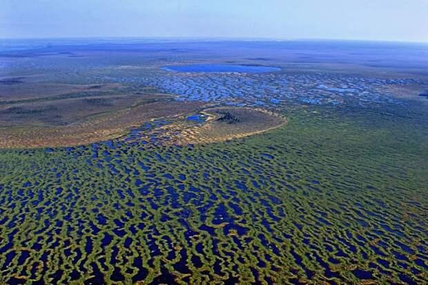 5шокирующих фактов оВасюганских болотах