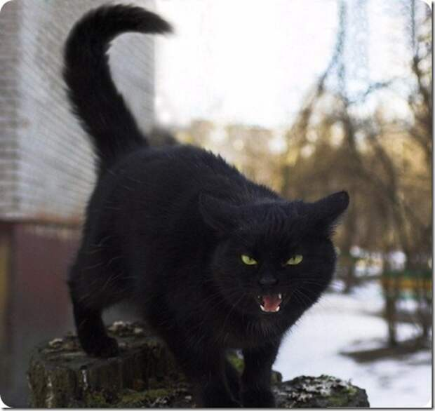 """Двадцать семь """"почему"""" о кошках"""