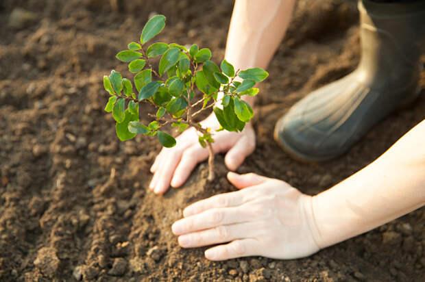 Вдоль Алтуфьевского шоссе высадят деревья и кустарники