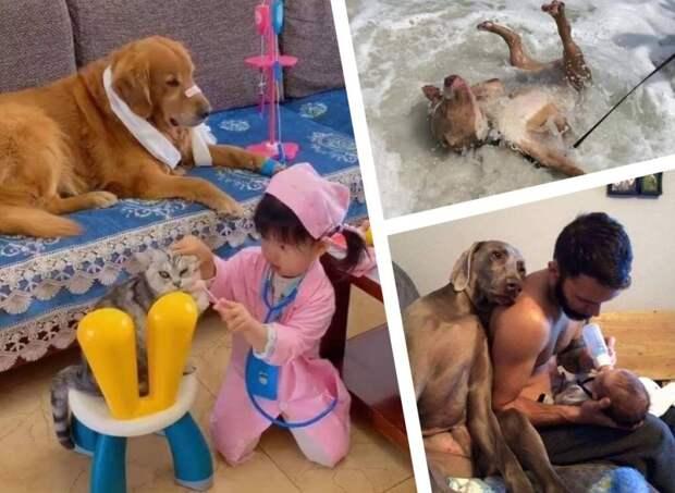 17 фото забавных животных, которые помогут скрасить даже самый неудачный день и настроят на позитив