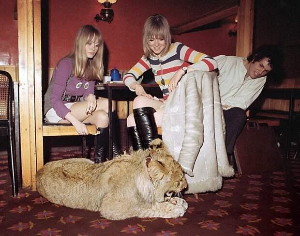 Лев Кристиан обедает с моделью Эммой Бриз и ее друзьями в ресторане Casserole на Кингс-Роуд. Львенок был куплен в универмаге Harrods в ноябре 1969 года Кристиан, возвращение животных, домашний любимец, животные и люди, история любви, лев, реабилитация, спасение львенка