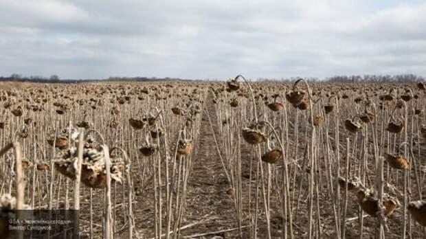 Хитрый плане Киева: Запад нашел лазейки, позволяющие скупить землю Украины